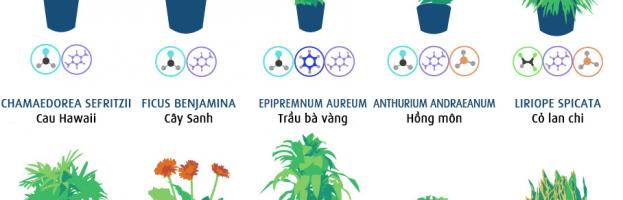 [Infographic] Một số loại cây giúp thanh lọc không khí trong nhà